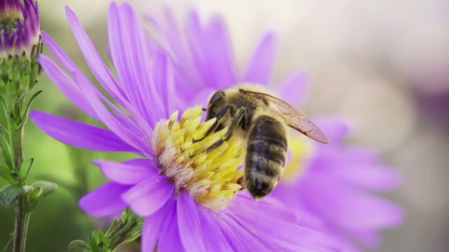 slow motion: pollination - bee stock videos & royalty-free footage