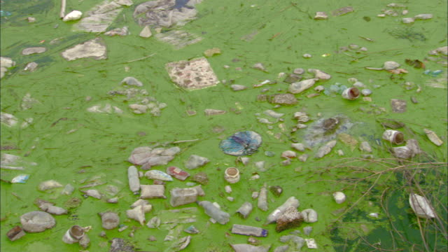 ms ha pan polluted canal or pond, tianjin, tianjin, china - water pollution stock videos & royalty-free footage