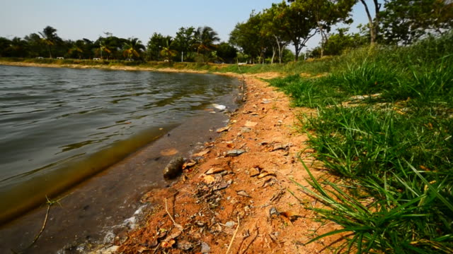 Polluted water and dead fish