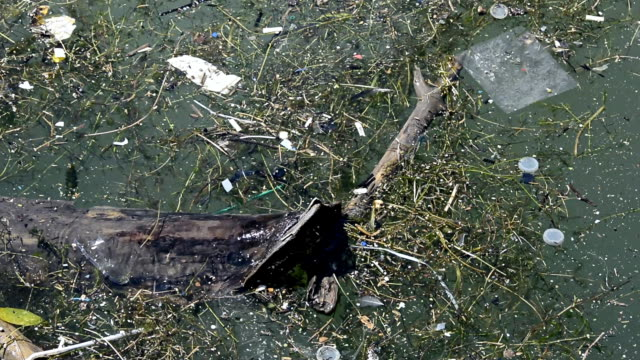 Pollution of plastic items in sweet water lake
