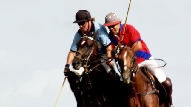 stockvideo's en b-roll-footage met polo match - paard paardachtigen