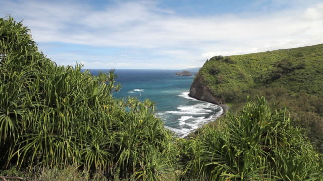 ms pololu valley and ocean with bushes and seen from pololu valley lookout / waimea, hawall, big island, united states  - 打ち寄せる波点の映像素材/bロール