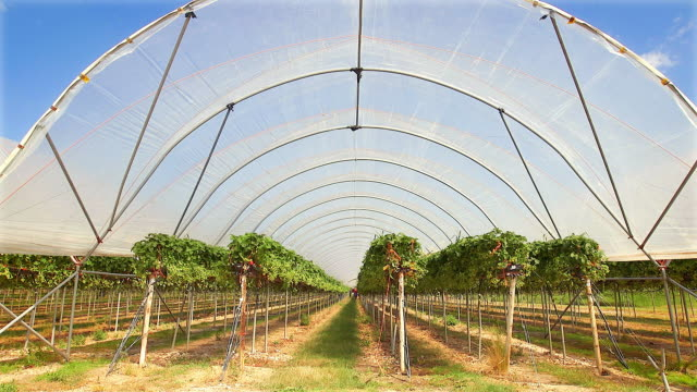 poly tunnels in which fruit is intensively grown. - copy space stock videos & royalty-free footage