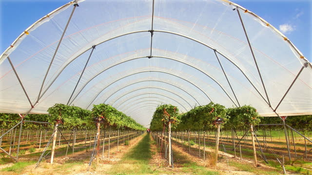 poly tunnels in which fruit is intensively grown. - グリーンハウス点の映像素材/bロール