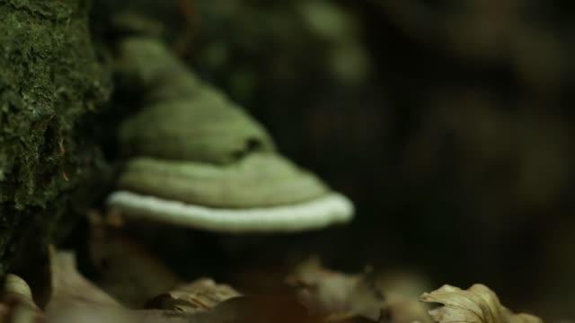 Fungo poliporo perto do chão da floresta