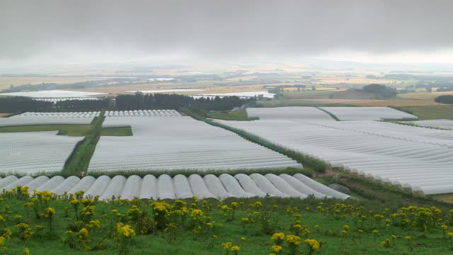 polytunnels on fruit farm, uk - グリーンハウス点の映像素材/bロール