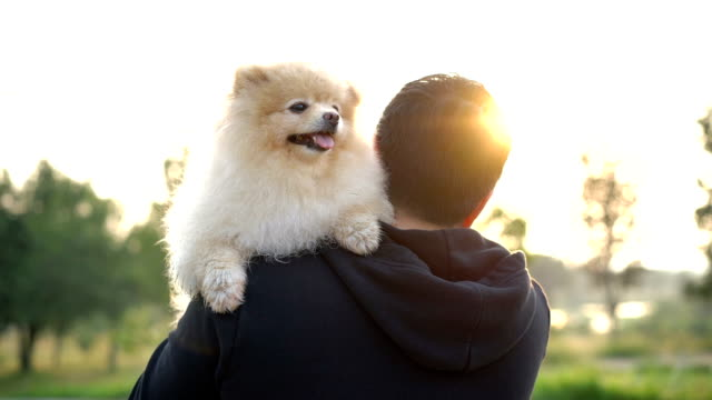 slo mo - pomeranian on his best friend shoulder, walking on pubilc park - young animal stock videos & royalty-free footage
