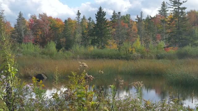 pond among forest on a sunny autumn day in vermont - vermont stock videos & royalty-free footage