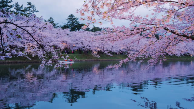 ws pond and cherry blossom in hirosaki park, hirosaki, aomori prefecture, japan - aomori prefecture stock videos & royalty-free footage