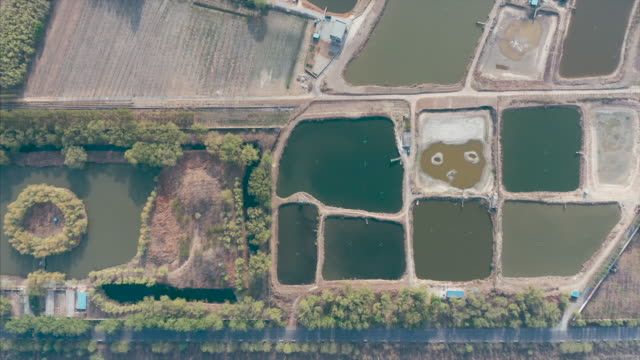 pond and field aerial view - liyao xie stock videos & royalty-free footage