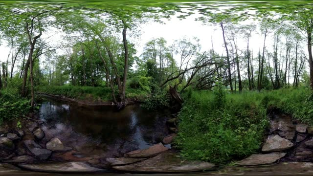 pond and wetland with alluvial forest, 360vr, vr, equirectangular panoramic, monoscopic - ハンノキ点の映像素材/bロール