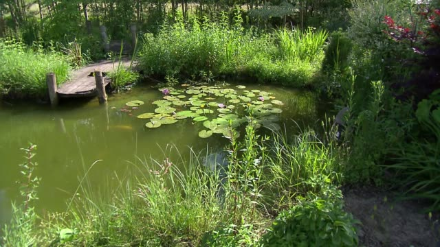 pond in garden - lily stock videos & royalty-free footage