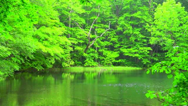 pond in green forest, aomori, japan - plusphoto stock videos & royalty-free footage