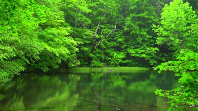 pond in green forest, aomori, japan - aomori prefecture stock videos & royalty-free footage