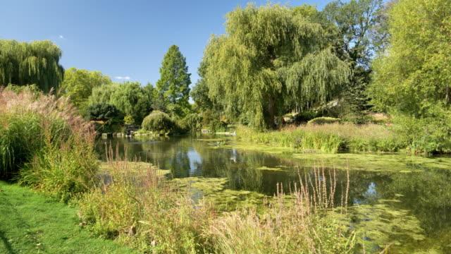 vídeos de stock, filmes e b-roll de lagoa na secção de jardim londres regents park queen mary - parque regents