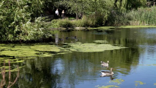 Étang de Queen Mary de Londres Regent Park Garden section