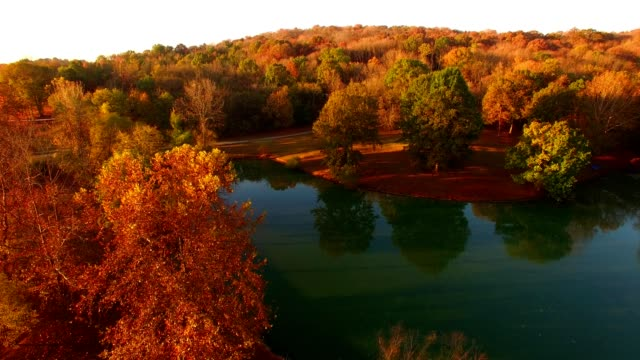 pond in nashville - autumn leaf color stock videos and b-roll footage