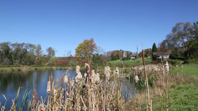 Pond in Northern Pennsylvania