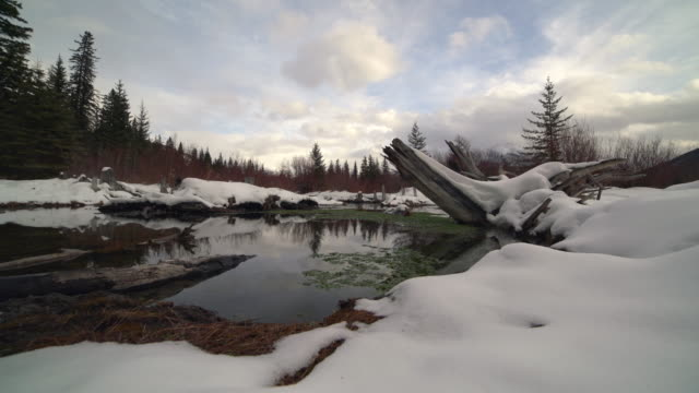 Pond Old stump in winter