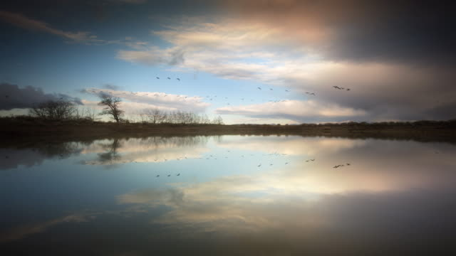 pond reflecting sky and geese migrating - anatra uccello acquatico video stock e b–roll
