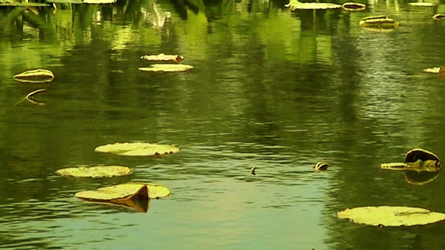 pond surface reflection (anamorphic dv) - anamorphic stock videos & royalty-free footage