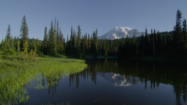 wide pan pond with reflection of mount rainier and pine forest in background - mt rainier national park stock videos & royalty-free footage