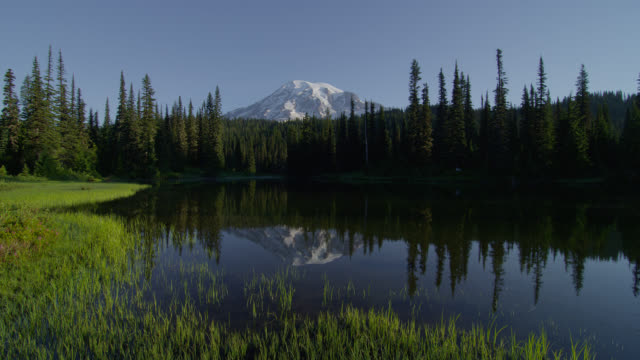 wide shot pond with reflection of mount rainier and pine forest in background - mt rainier national park stock videos & royalty-free footage