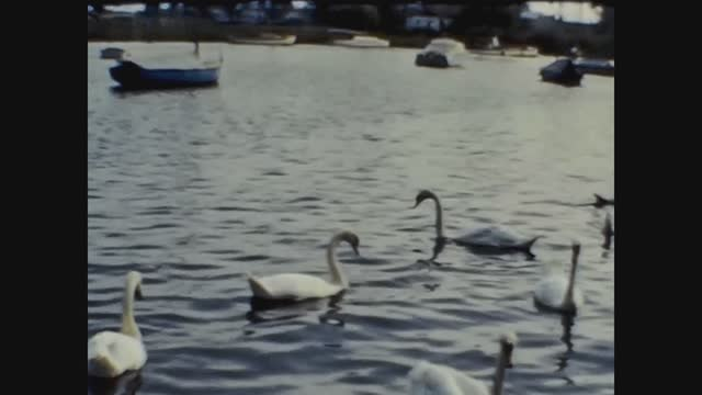 pond with swans - swimming stock videos & royalty-free footage