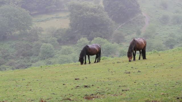 ponies - exmoor national park stock videos & royalty-free footage
