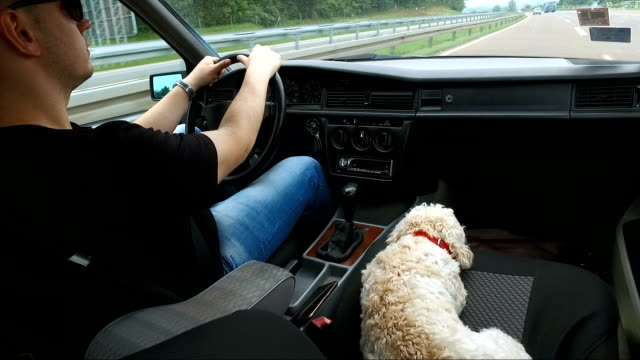 poodle at the road on the passenger seat with her owner - passenger seat stock videos & royalty-free footage