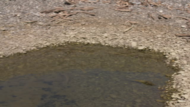 Pool of discolored green water near shoreline of Lake Forsyth due to toxic algal bloom