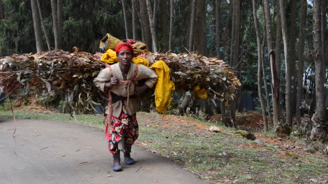 vídeos y material grabado en eventos de stock de ms poor neighborhood woman carrying big load of fire wood in shero meda area / addis ababa, ethiopia - leña