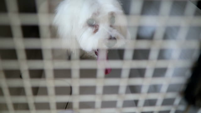 a poor white dog in his tiny metal cage - leaving prison stock videos & royalty-free footage
