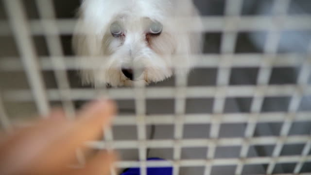 a poor white dog in his tiny metal cage - cage stock videos & royalty-free footage