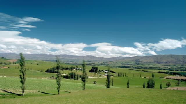 T/L, WS, Poplar trees in fields, mountain range in background, Fairlie, South Island, New Zealand