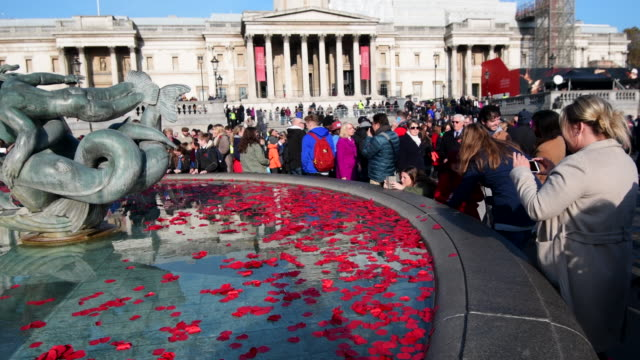 poppies float in a fountain during an armistice day event in trafalgar square on november 11, 2016 in london, england. the annual armistice day... - armistice stock videos & royalty-free footage
