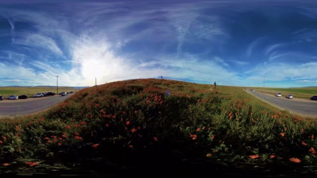 Poppies in antelope valley California US