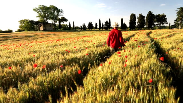 poppy flowers barley italian farmhouse male walking tuscany italy  - 手をかざす点の映像素材/bロール