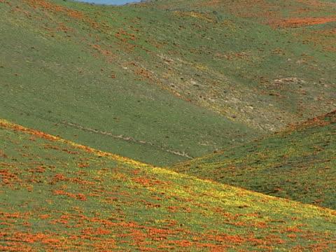 vídeos y material grabado en eventos de stock de poppy-clad hills - artbeats
