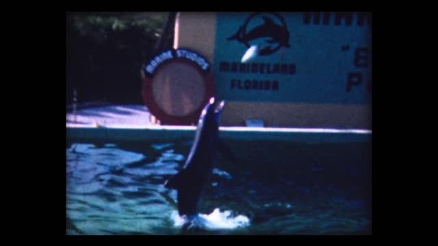 1980 porpoise tricks on marineland florida - ネズミイルカ点の映像素材/bロール