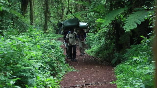 porters walk trail toward camera - wiese stock videos & royalty-free footage