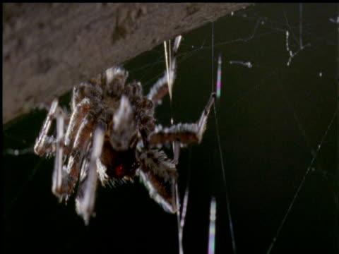 vídeos de stock, filmes e b-roll de portia jumping spider on branch - linha ondulada