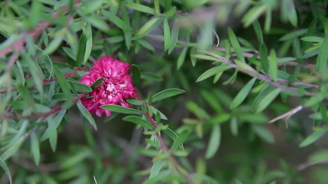 Porto folhas flor