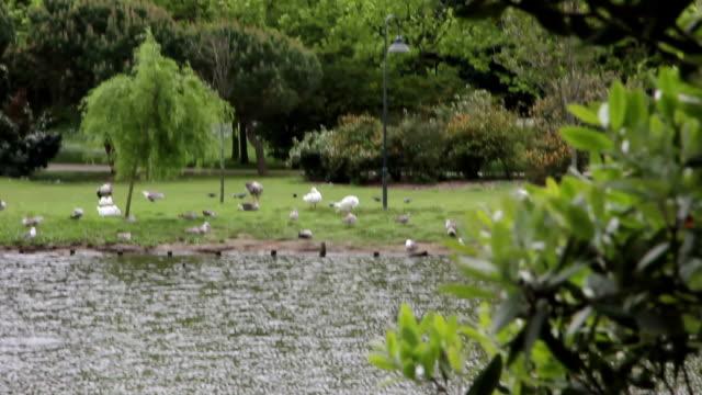 porto parque da cidade duck - cidade stock videos & royalty-free footage