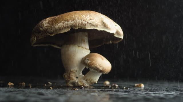 vídeos de stock e filmes b-roll de portobello mushroom protects baby - portobello