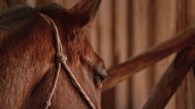 tu-porträt eines braunen pferdes - pferdestall stock-videos und b-roll-filmmaterial