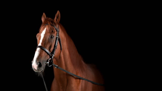 slo mo portrait of a calm brown horse - brown stock videos & royalty-free footage