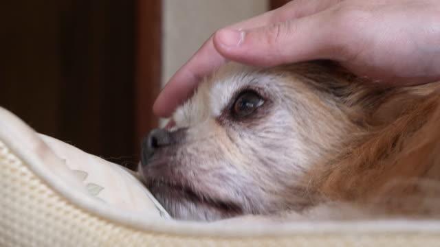 vídeos de stock, filmes e b-roll de retrato de um cachorro. - almofada
