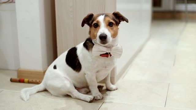 Portret van een hond met een strikje op een kids party
