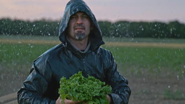 vidéos et rushes de super slo mo portrait d'un agriculteur qui récolte la laitue sous la pluie - cueillir